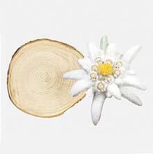 L'Edelweiss, nouvelle matière chez Lenzing dans idées naturelles edelweiss-lenzing